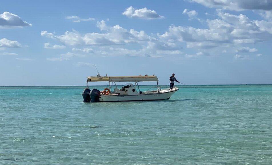 قارب توت ياحوت